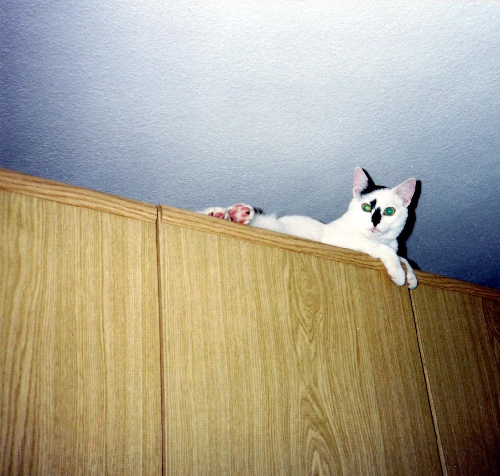 Charlie von oben herab